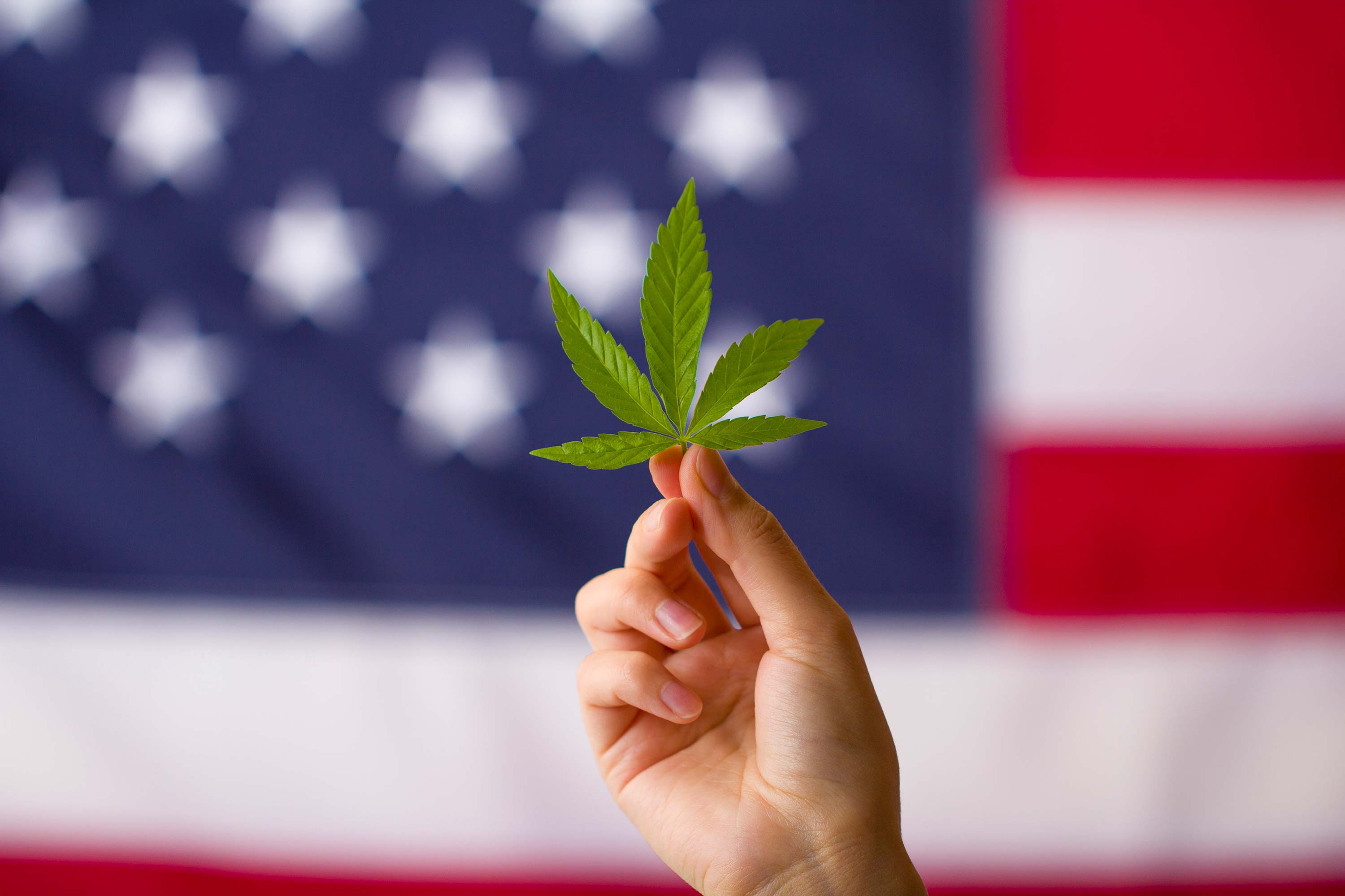 Photo for The Uprising: The Legalization of Cannabis in Rhode Island