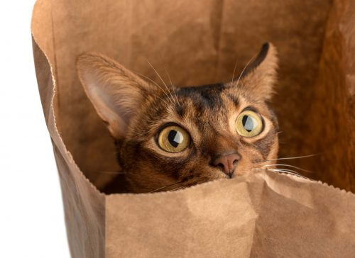 Can We Fix It: Letting the Cat Out of the Baginski